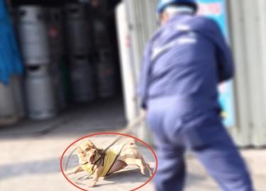 TP.HCM: Chó vô chủ sẽ bị xử lý ra sao sau thời hạn 72 giờ?