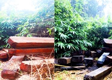 Vụ gỗ lậu vùng biên ở Kon Tum: Xem xét khởi tố vụ án