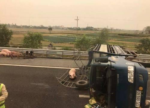 """Xe tải lật, hàng chục con lợn """"tung tăng"""" trên cao tốc"""