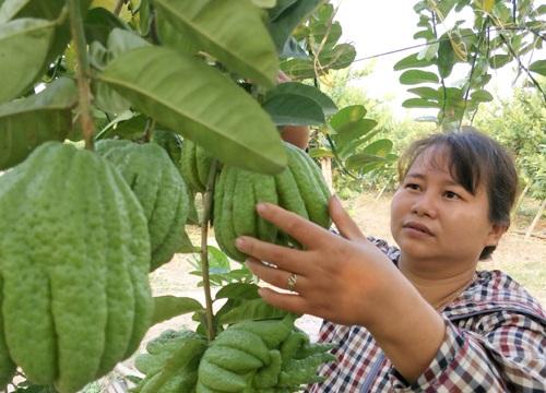 Trồng cây gì bán Tết: Chăm cây dại, dân Thủ đô bất ngờ kiếm cả tỷ