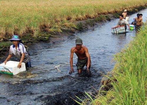 Lãi cao, người dân đổ xô nuôi tôm càng xanh làm diện tích tăng vọt