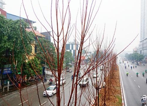 Cận cảnh hàng trăm cây phong lá đỏ được trồng giữa Thủ đô