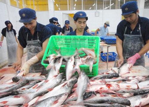 Giá cá tra đạt đỉnh, người Trung Quốc ngày càng mê ăn cá tra Việt