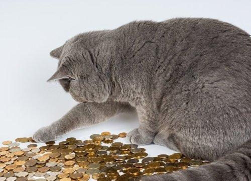 Bà chủ qua đời để lại gần 1 tỷ cho mèo thừa kế