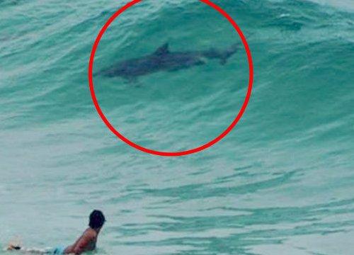 Sinh vật bí ẩn thân cá heo, đuôi cá mập ở bãi biển Úc