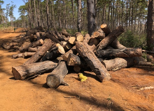 Một kiểm lâm bị bắt vì nhận hối lộ để lâm tặc phá rừng