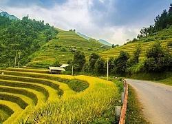 Lên Núi Cấm… ngắm Hoa Anh Đào bung nở - Du lịch