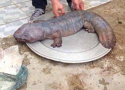 Thực hư 'thuỷ quái' xuất hiện ở Việt Nam