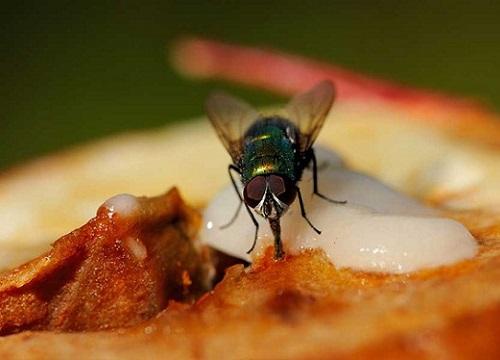 """Mách bạn độc chiêu khiến bọn ruồi """"dạt nhà"""" đi luôn, cả đời không dám quay lại"""