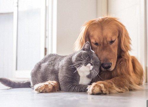 """""""Vã"""" quá rồi, mèo ta chủ động đi gạ gẫm chú chó cùng nhà và cái kết cười ra nước mắt"""